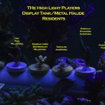 The High Light Players