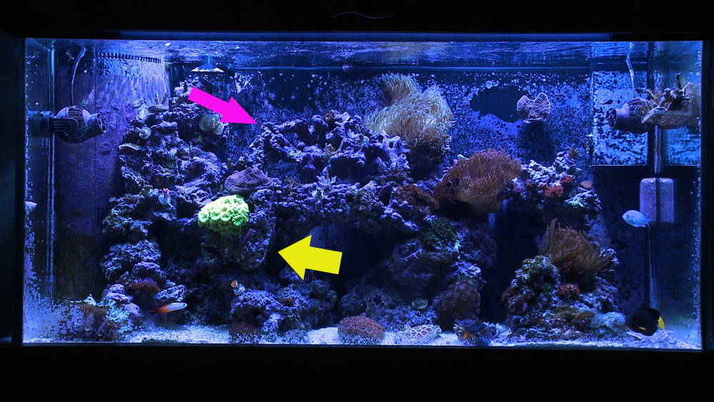 Why I Involuntarily Re Did My Aquascaping Mr Saltwater Tank