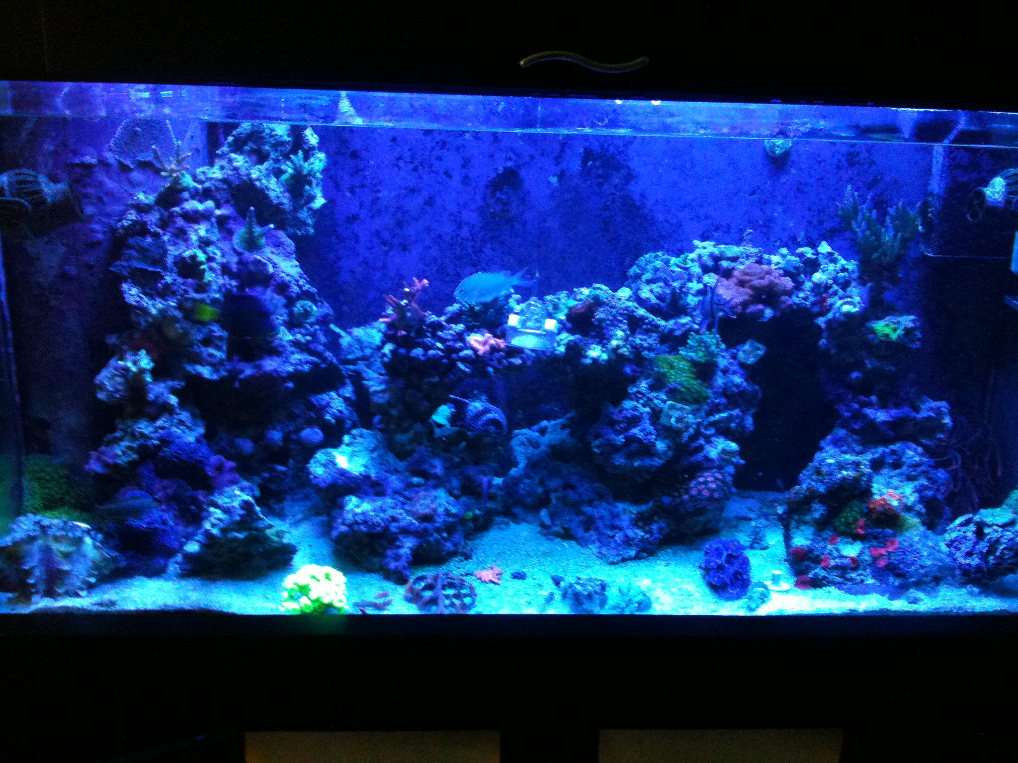Why I Involuntarily Re-did My Aquascaping – Mr. Saltwater Tank