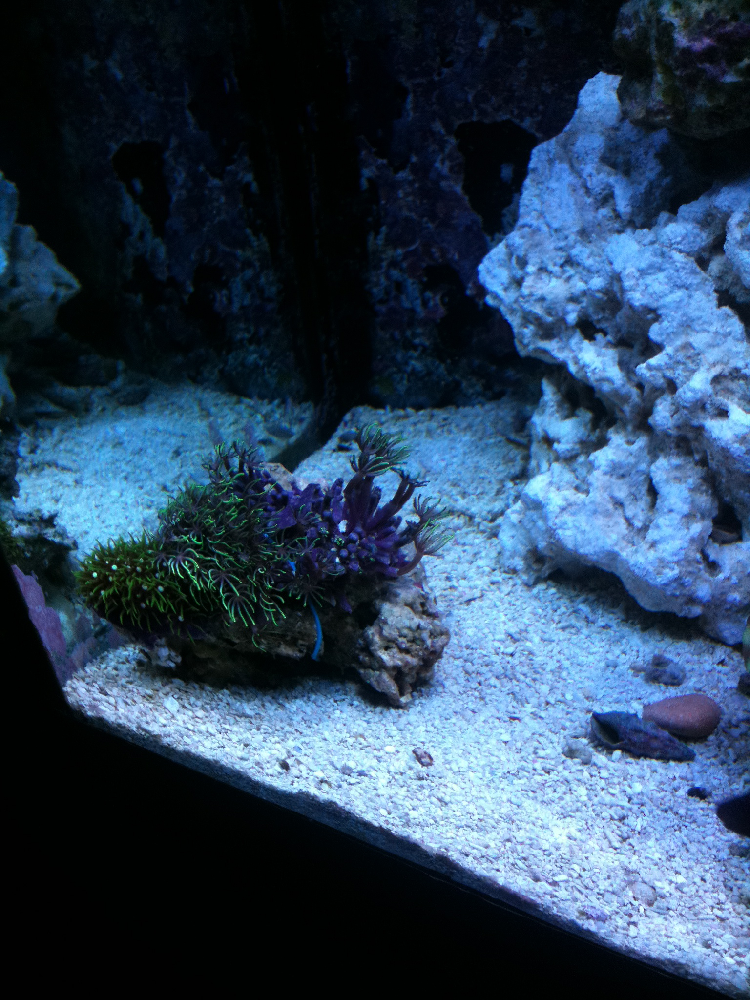 These Corals Need Warning Labels – Mr Saltwater Tank