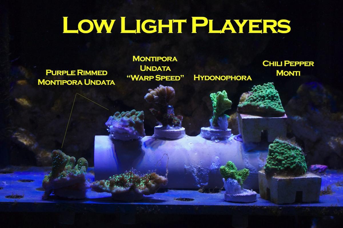 ... Light Players. u2014u2014u2014u2014u2014u2014u2014u2014u2014  sc 1 st  Mr. Saltwater Tank & Mr. Saltwater Tanku0027s LED Experiment u2013 Mr. Saltwater Tank azcodes.com