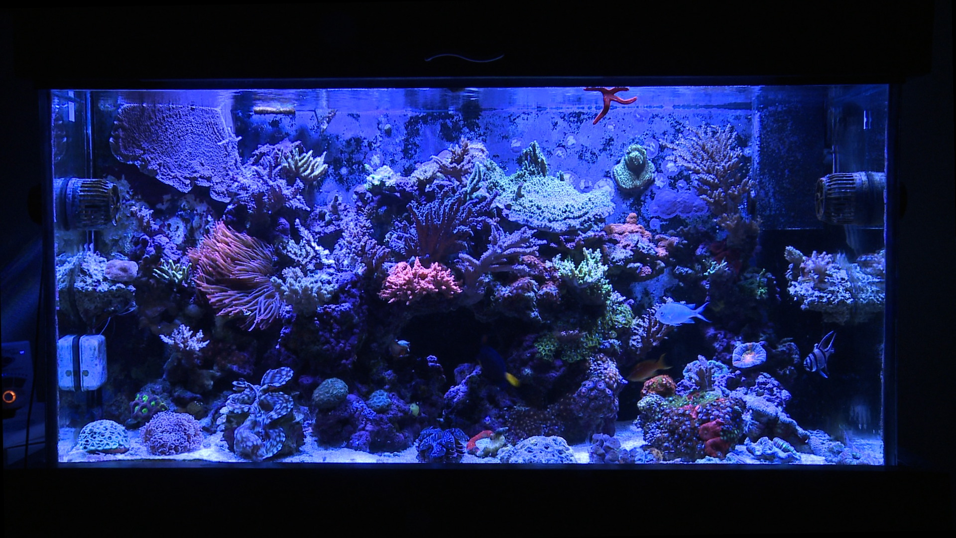 Saltwater aquarium - Full Tank Shot