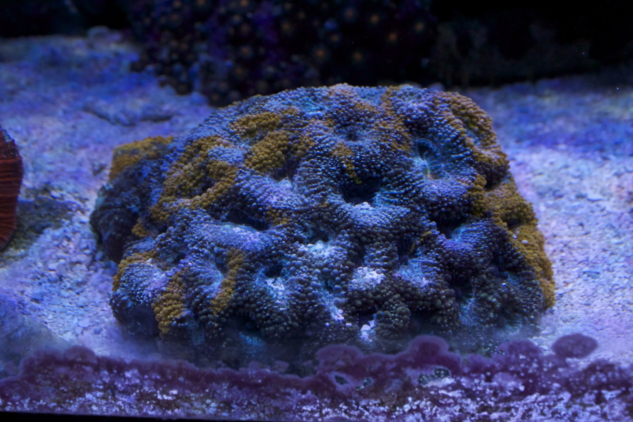 90g aquarium for sale mr saltwater tank s 90g reef tank for Reef fish for sale